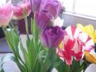 ヤマヤの春